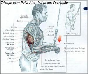 treino-triceps-exercicio