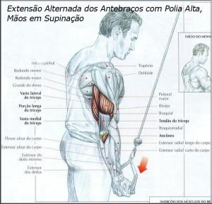 exercicio-treino-triceps