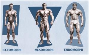 mesomorfo-ectomorfo-endomorfo-treinos-academia