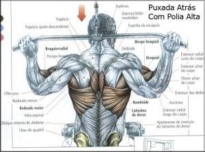 Treino dorsal hipertrofia