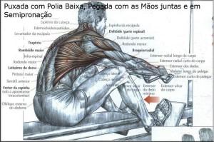 exercicio-peito-3