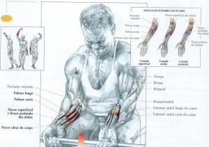 treino antebraço hipertrofia