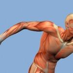 Tipos de contração muscular – por Fernanda Colella