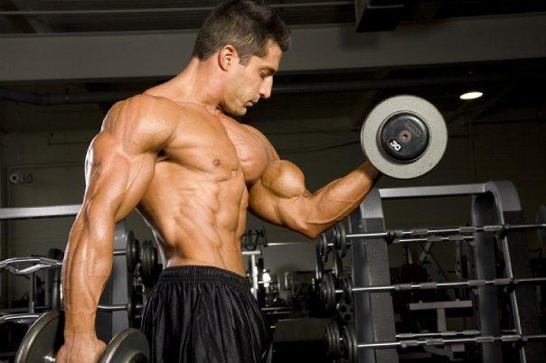 Treino básico de bíceps para hipertrofia